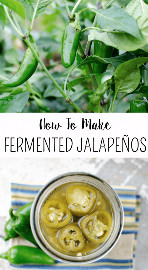 Learn how to preserve lacto-fermented jalapeños- This is SO quick and easy! Takes only like 5 minutes, doesn't use a canner, and lasts for 6 months!