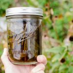 How to Make Echinacea Tincture (Recipe)