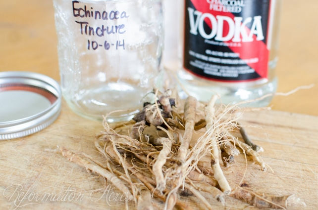 Homemade Medicine Made Simple: How to Make Echinacea Tincture