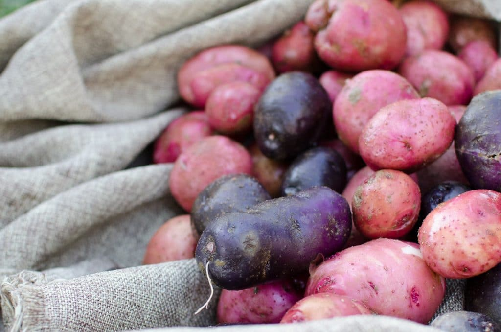 How to Can Potatoes (Plus 10 Other Ways to Preserve Them)