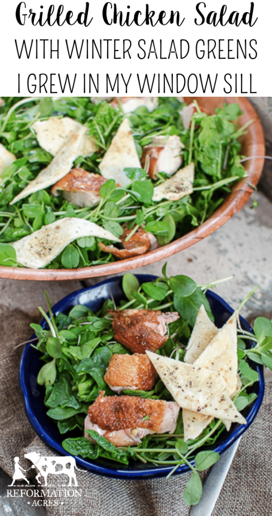 Grilled Chicken Salad with Herbed Tortilla Croutons (I grew the greens for the salad on my window sill in the dead of winter!)