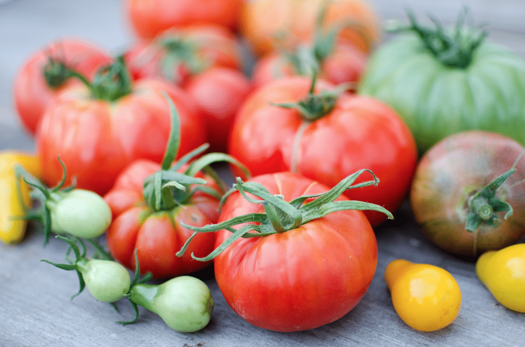 Garden-Fresh & Chunky Heirloom Tomato Salsa (with instructions for canning!)