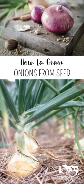 Learn How to Grow Onions from Seed to Harvest! One of my favorite vegetables to start from seed are onions! They give me a chance to garden even when the snow is still on the ground; Growing Onions from Seed