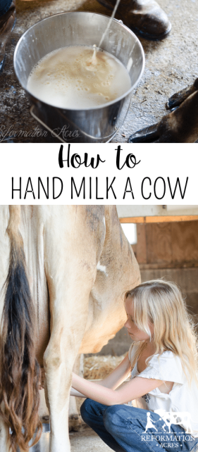 Watch this video to see our daily routine with our family cow and how we milk a cow by hand.