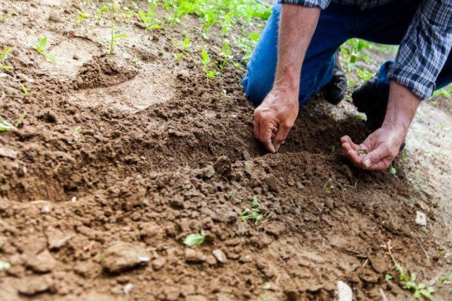 How Long Do Seeds Last: 10 Heirloom Seeds With a Long Viability