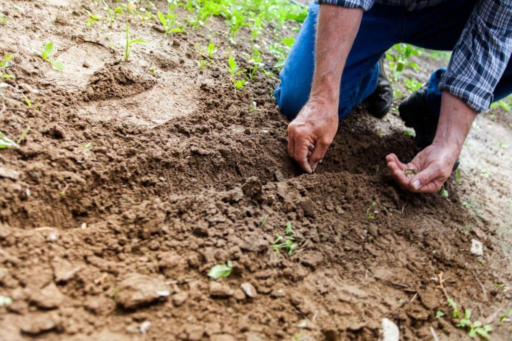 How Long Do Seeds Last? (Plus 13 Heirloom Seeds With a Long Viability)