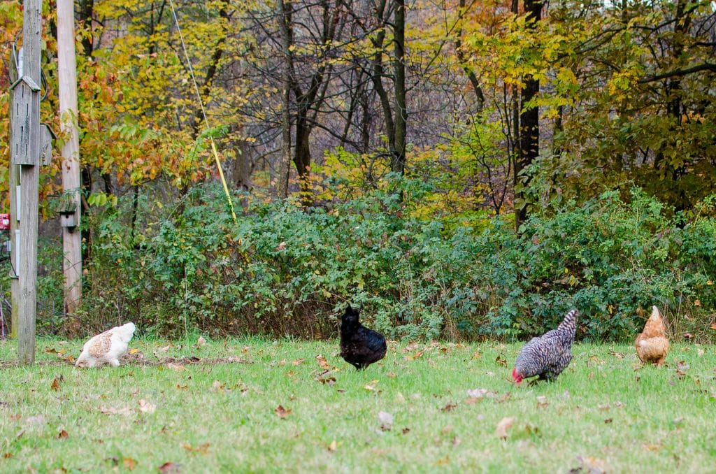The Myth of Homestead Livestock Generalizations