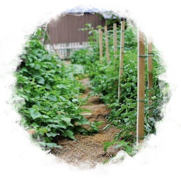Gardening & Orchard