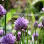 Beginner's Herb Garden: What to Plant