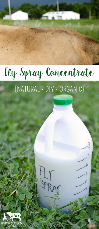 Best Homemade Fly-Spray