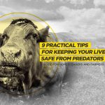 9 Tips on How to Protect Your Livestock from Predators