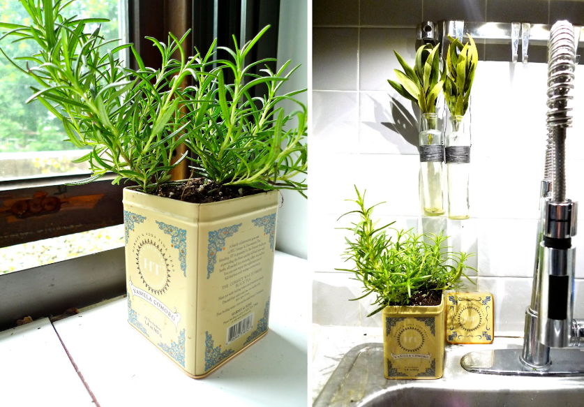 indoor herb garden in a box