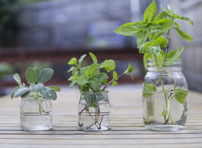 indoor herb garden in three different jars