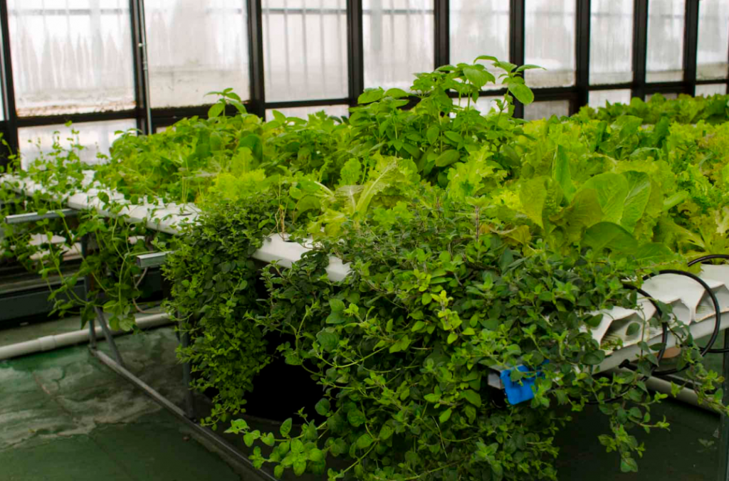 Hydroponic garden on a greenhouse garden