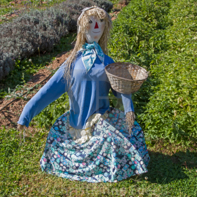 Scarecrow wearing blue outfit