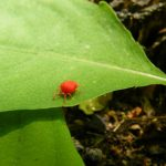 How To Get Rid Of Chiggers: Tips and Guides