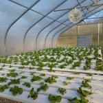 How to Build a Hydroponic Garden? Tips and Guide