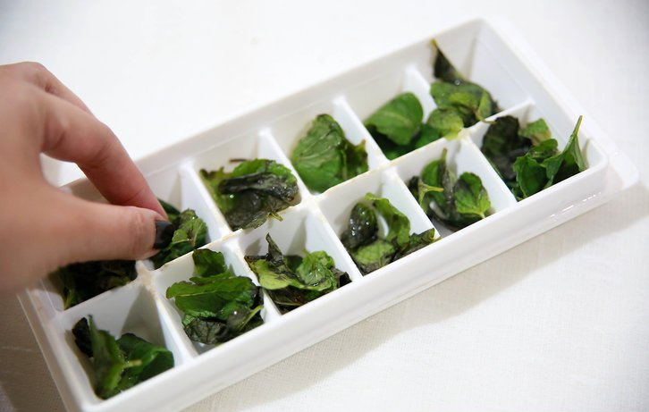 Basil placed on a ice cube maker