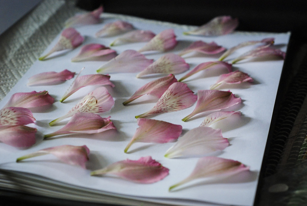 Pink flowers for flower pressing