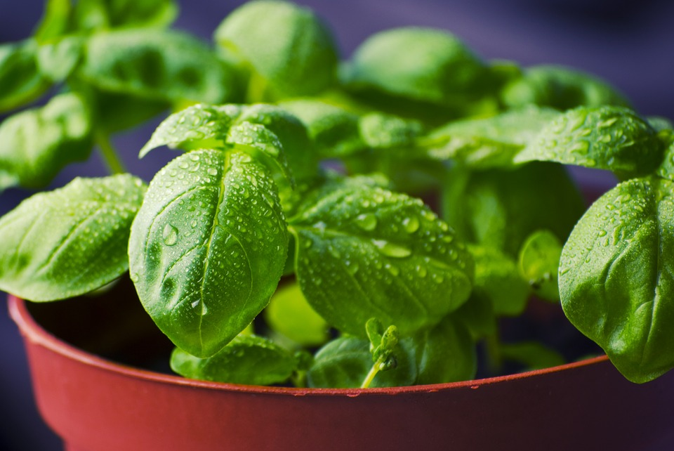 How to Freeze Basil in 5 Simple Steps