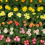 5 Most Popular Types Of Flowers Found In Farms