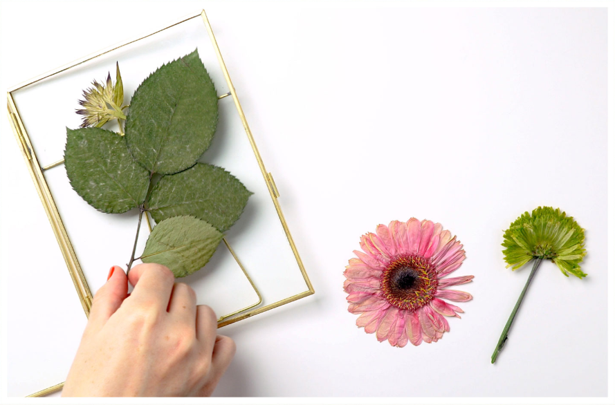 pressing a flower and leaves
