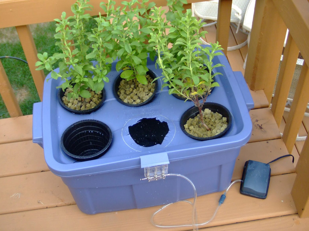 Hydroponic system in a blue container