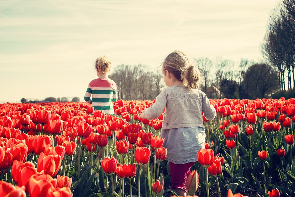 two kids wandering in a field of red tulips