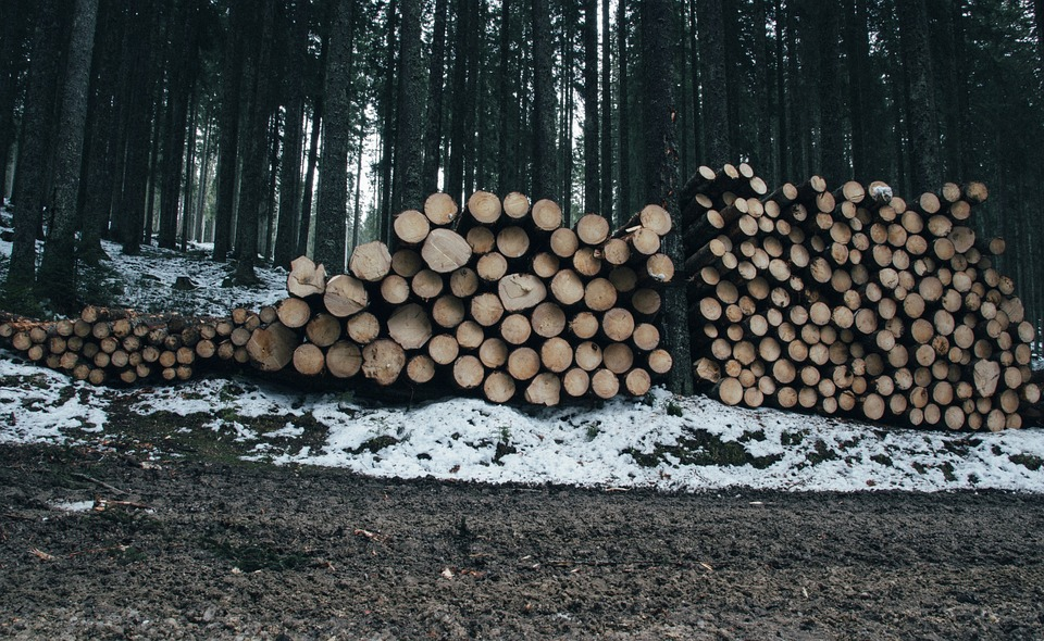 logs for building a cabin