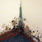 How To Get Rid Of Black Mold: Ultimate Guide