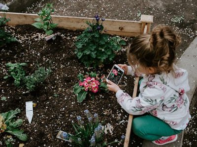 Little Girl taking a picture of the flower