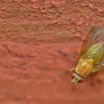 Homemade Fly Trap – 4 Simple Ideas You Can Make Today