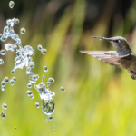 Start Attracting Hummers With A Hummingbird Feeder Recipe