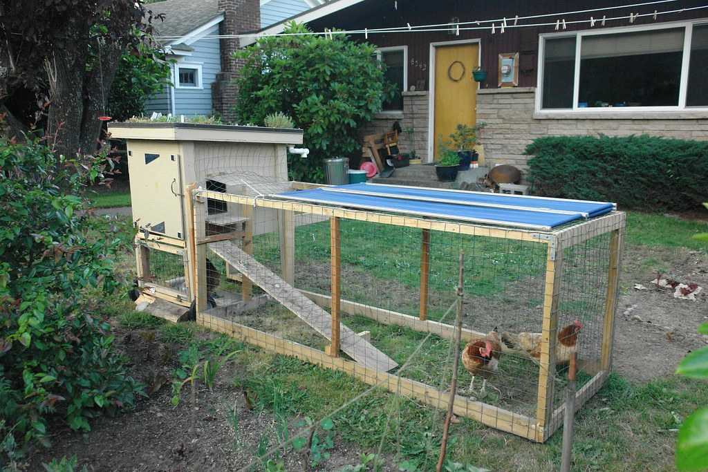 How to Build a Cheaper DIY Chicken Coop
