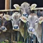 10 Keys to Successful Livestock Farming